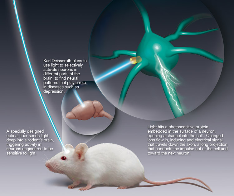 Neuron Control: Mice